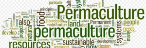 Finding Permaculture: Resources and Connections