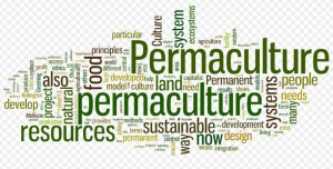 permanentculturenow