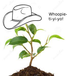 whoopietiyiyo