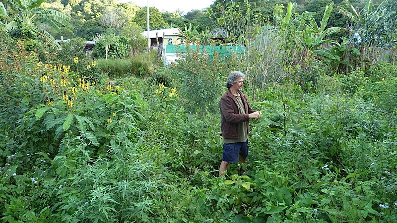 Food Security & Permaculture